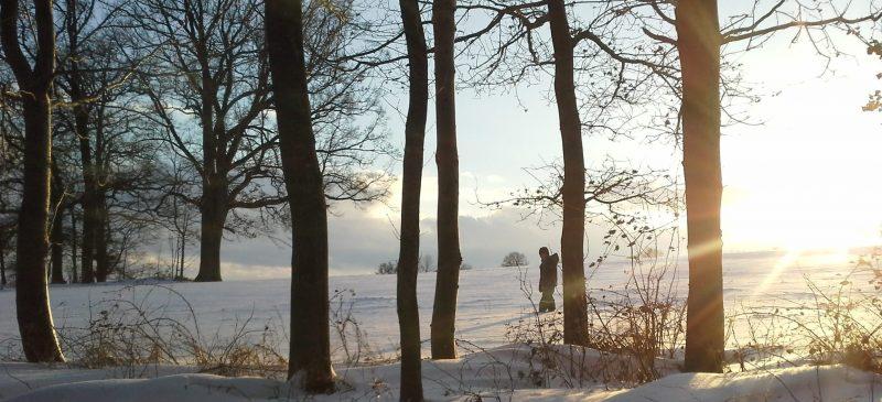 Winterlandschaft in der Abendsonne