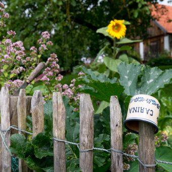 Gartenzaun mit Trinkbecher und Blumen
